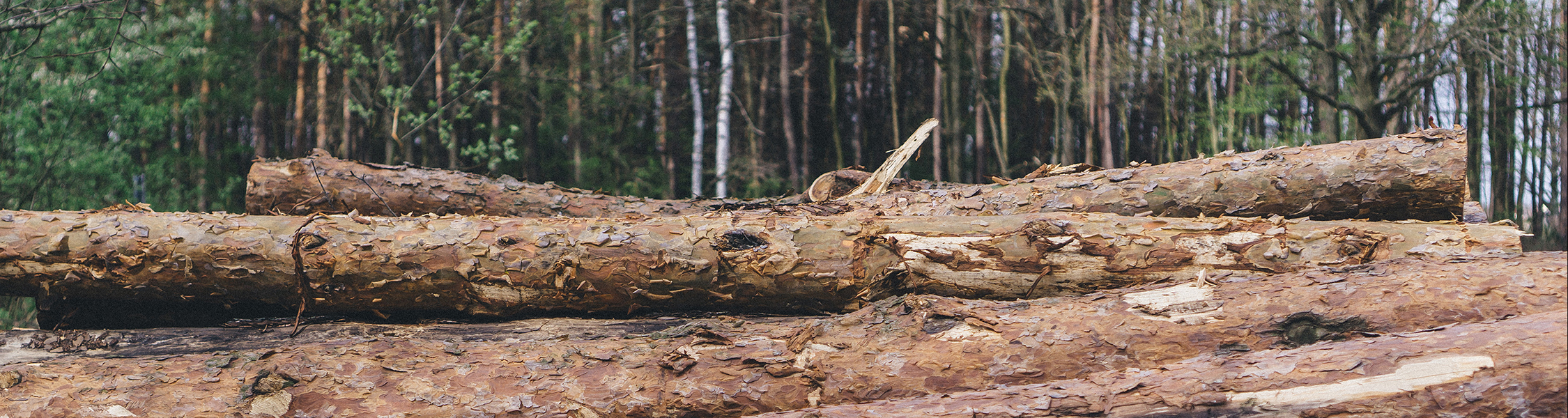 天然木イメージ
